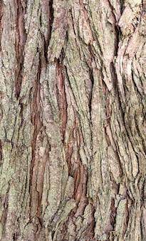 Vista frontal de la textura de la corteza de los árboles