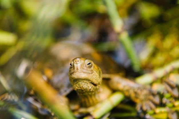 Vista frontal de la tortuga