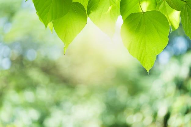 Vista hermosa del primer de la hoja verde de la naturaleza en el fondo borroso verde con la luz del sol y el espacio de la copia. se utiliza para el fondo de verano de ecología natural y el concepto de papel tapiz fresco.