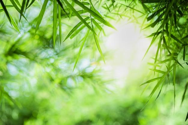 Vista de la hoja de bambú verde natural sobre fondo verde borrosa