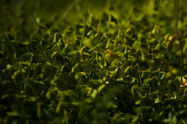 Vista de hojas verdes en el fondo