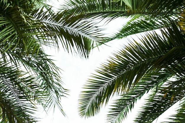 Vista inferior hojas exóticas verdes