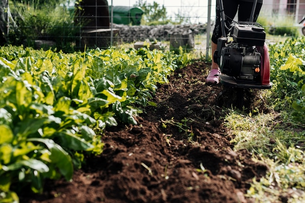 Vista inferior jardinero trabajando