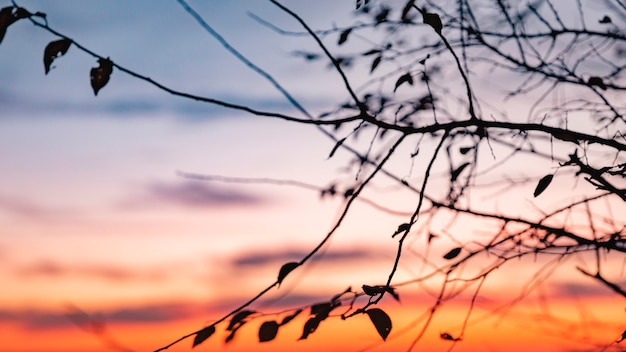 Vista inspiradora de la luz de la mañana
