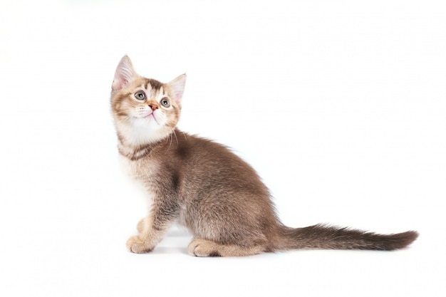 Vista lateral del adorable gatito marrón.