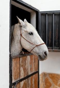 Vista lateral del caballo en los establos de una granja