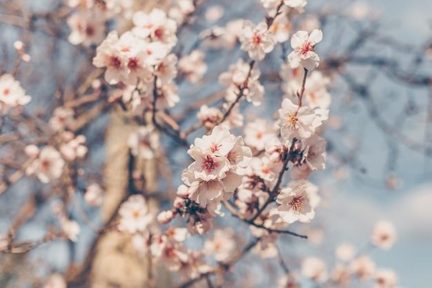 Vista lateral del cerezo en flor con cielo