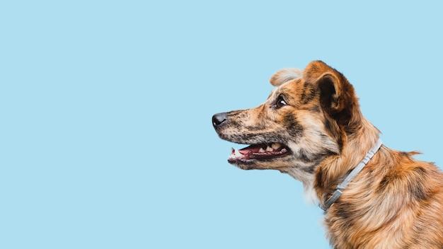 Vista lateral del espacio de copia del perro doméstico