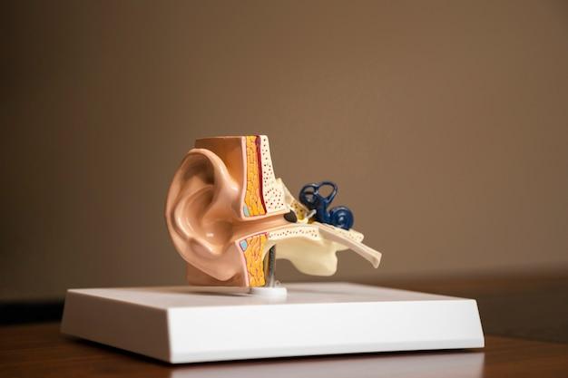 Vista lateral de la estructura de la oreja en una plataforma.