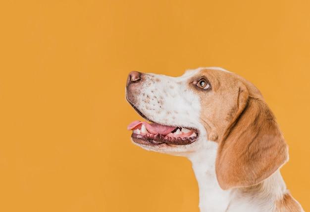Vista lateral feliz perro mirando hacia arriba