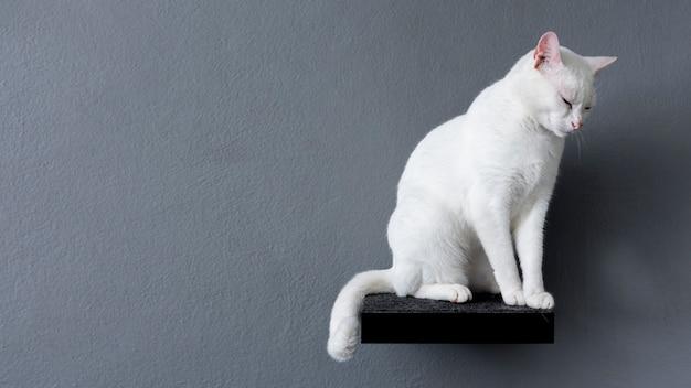Vista lateral del gato blanco sentado en el estante