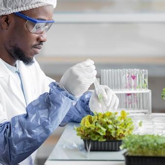Vista lateral del investigador masculino en el laboratorio de biotecnología con planta