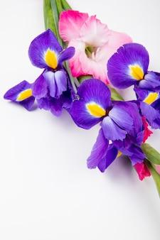 Vista lateral de iris de color púrpura oscuro y rosa y flores de gladiolo aisladas sobre fondo blanco con espacio de copia