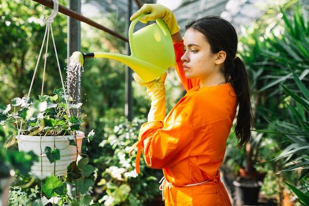 Vista lateral de un jardinero hembra regando planta en maceta en invernadero