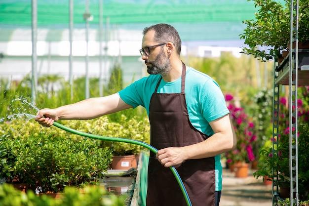 Vista lateral del jardinero macho regar las plantas en macetas de la manguera. hombre barbudo caucásico vestido con camisa azul, gafas y delantal, cultivo de flores en invernadero. actividad de jardinería comercial y concepto de verano.