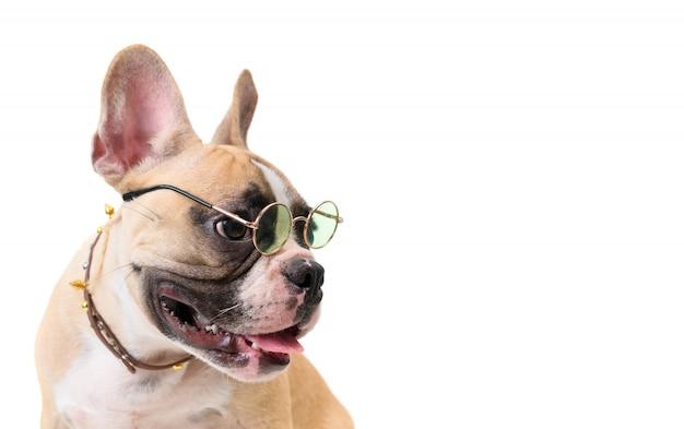 Vista lateral del lindo bulldog francés con gafas