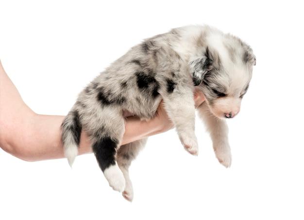 Vista lateral de una mano sosteniendo un cachorro mestizo aislado en blanco