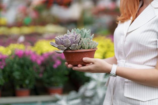 Vista lateral en manos de mujer sosteniendo suculentas o cactus en macetas con otras flores de colores