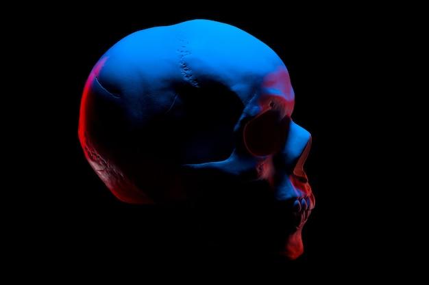 Vista lateral del modelo de yeso del cráneo humano con luces de neón