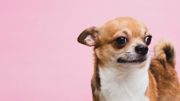 Vista lateral pequeño espacio de copia de perro doméstico