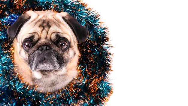 Vista lateral del perro con adornos navideños en el cuello