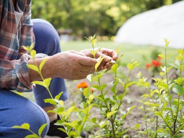 Vista lateral persona cuidando jardín