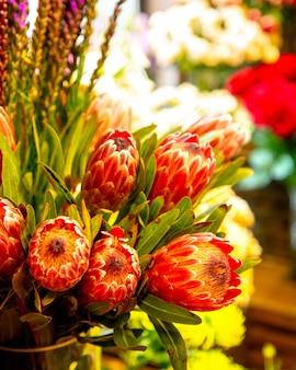 Vista lateral del ramo de brotes de flor roja rey protea