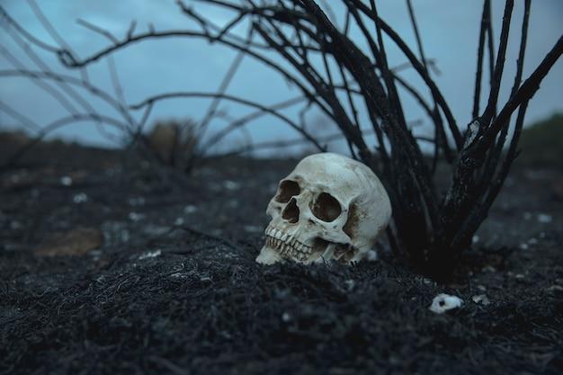 Vista lateral realista cráneo con ramas mirando a otro lado