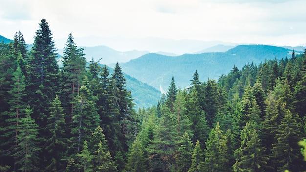 Vista a la montaña en las colinas cubiertas de bosque de pinos.