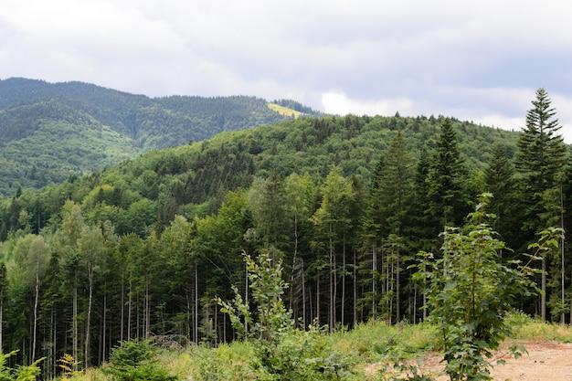 Vista de montañas y bosque salvaje desde el paisaje de altitud
