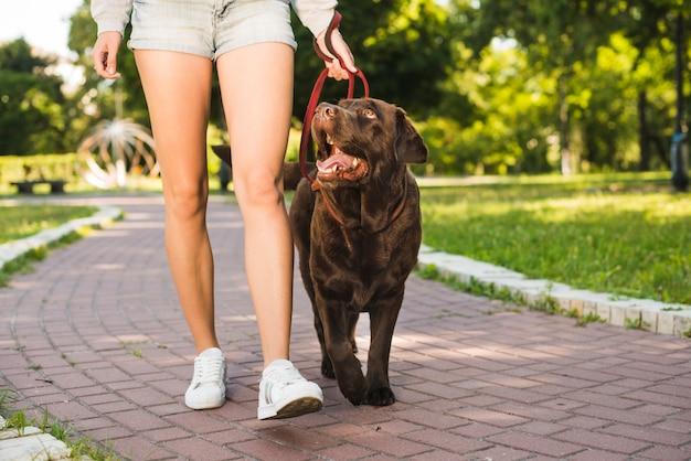 Vista de una mujer con su perro caminando en una pasarela en el parque