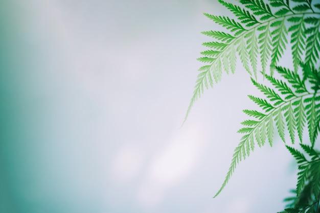 Vista de la naturaleza de hojas verdes frescas en el jardín en verano, ecología, concepto de fondo de pantalla fresco