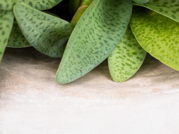 Vista de la naturaleza en primer plano de hojas verdes en el viejo piso de cemento blanco