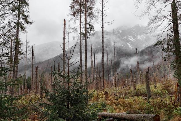 Vista de otoño, árboles verdes amarillos y montañas cubiertas de nieve.