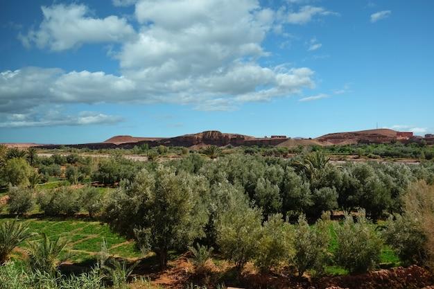 Vista del paisaje del campo de cultivo en oasis