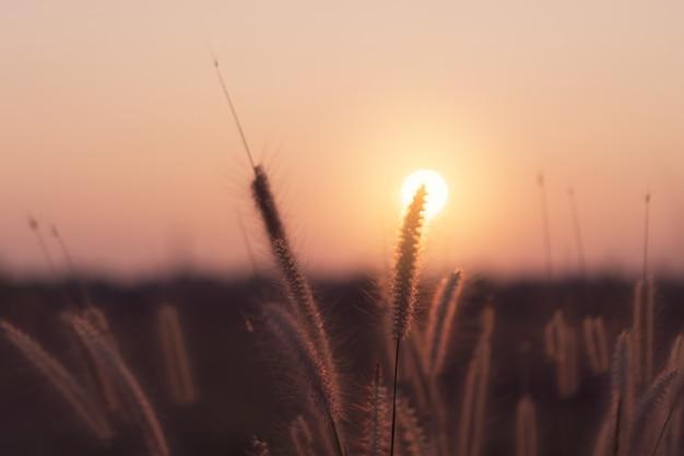 Vista de paisaje de flores de montaña y hierba paisaje con cielo hermosa puesta de sol y el amanecer.