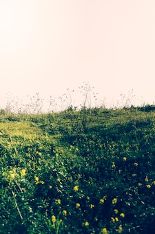 Vista del paisaje verde contra el cielo.