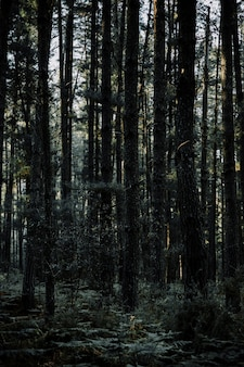 Vista panorámica de altos árboles tropicales que crecen en el bosque