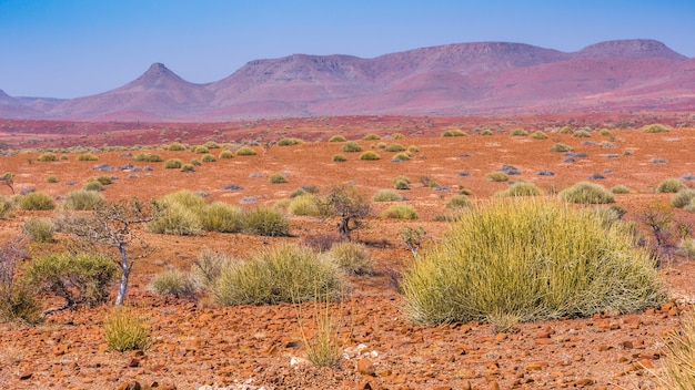 Vista panorámica del área de concesión de palmwag con arbustos de leche en namibia en áfrica.