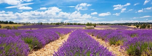 Vista panorámica del campo de lavanda y cielo nublado, francia