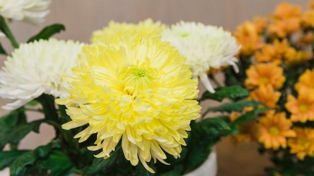Vista panorámica de flores de crisantemos blancos y amarillos.