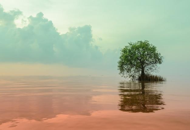 Vista panorámica de mangle manzana con reflejo en el mar.