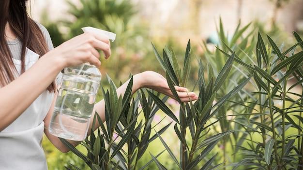 Vista panorámica de la mano de una mujer rociando agua en plantas frescas en el jardín