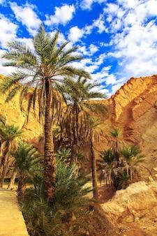Vista panorámica del oasis de montaña chebika.