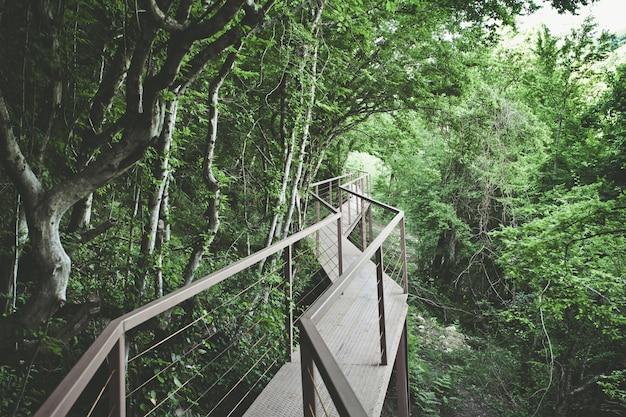 Vista panorámica del puente de hierro en bosque tropical