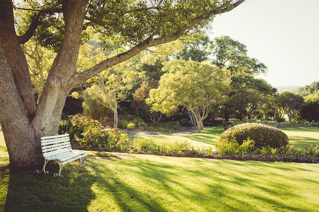 Vista de un parque en un día soleado