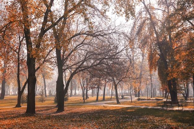 Vista del parque de otoño