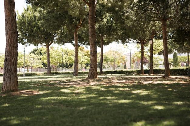 Vista del parque urbano de pino.