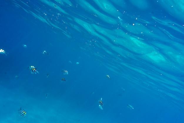 Vista de peces nadando bajo el agua