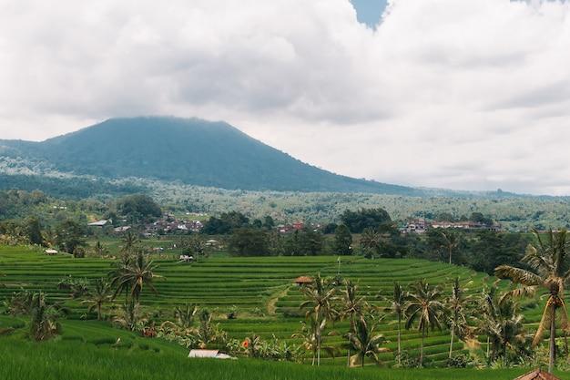 Vista perfecta de los campos de arroz y el volcán de la isla de bali, indonesia.